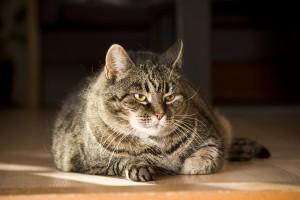 alte Katze