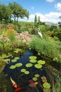 ein Teich mit Pflanzen