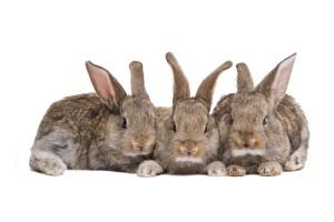 die Haltung von Kaninchen