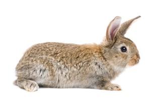 ein Kaninchen