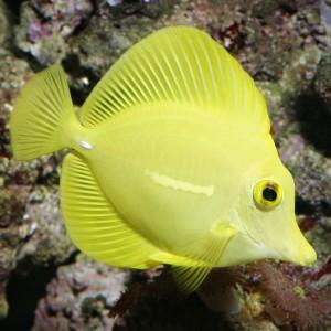Fisch krankheiten tierklinikennet for Fische algenfresser teich