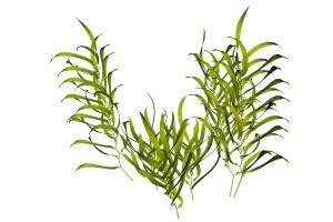 Pflanzen für Aquarien