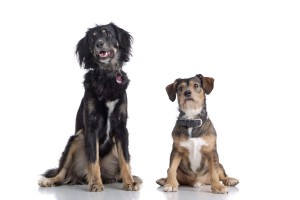 zwei sitzende Hunde