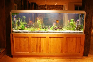 Beleuchtung von Aquarien