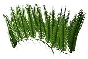 Pflanzen fürs Aquarium