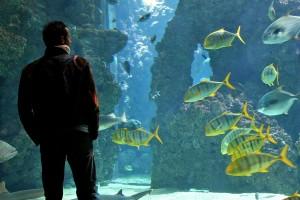 Mann vor einem Aquarium