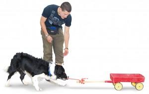 Mann trainiert mit einem Hund