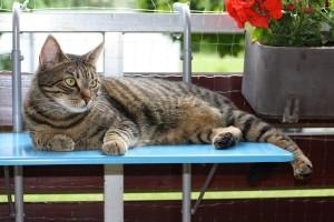 Eine Katze liegt auf einem gesichertem Balkon