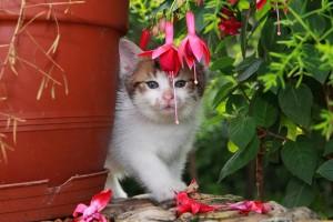 eine Katze im Garten