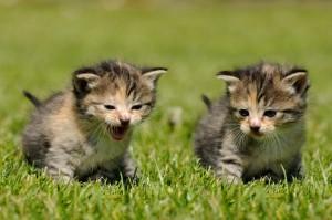 zwei Kitten auf einer Wiese