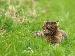 eine Katze in einer Wiese