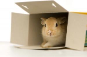 ein Kaninchen in einer Schachtel