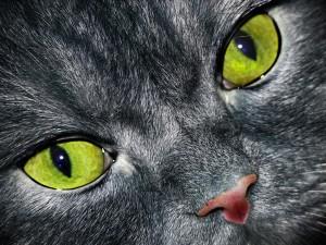 dunkle Katze mit grünen Augen