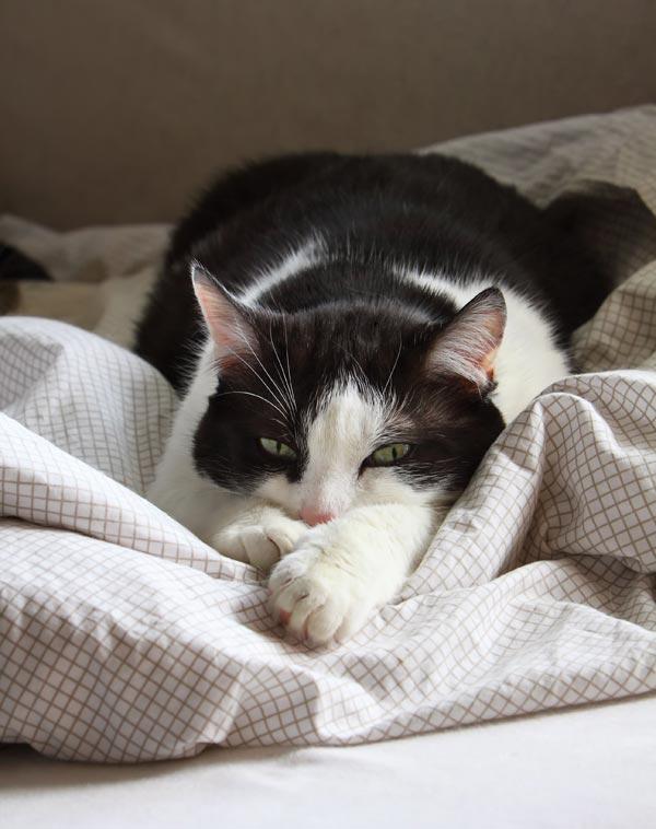 """Résultat de recherche d'images pour """"katze im bed"""""""
