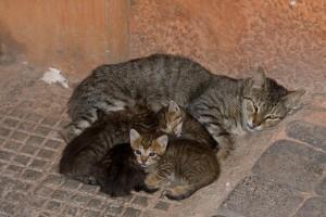 eine Katzenmutter mit ihren Kitten