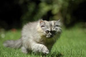 eine Katze schleicht über eine Wiese