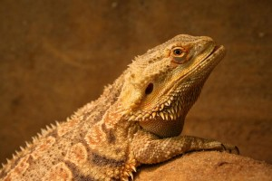 ein Reptil in einem Terrarium