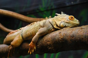 ein Reptil auf einem Ast