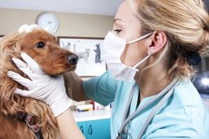 Tieraerztin mit einem Hund