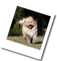 Bild aus dem Steckbrief der Hunderasse Elo