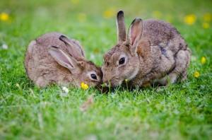 Kaninchen auf einer Wiese