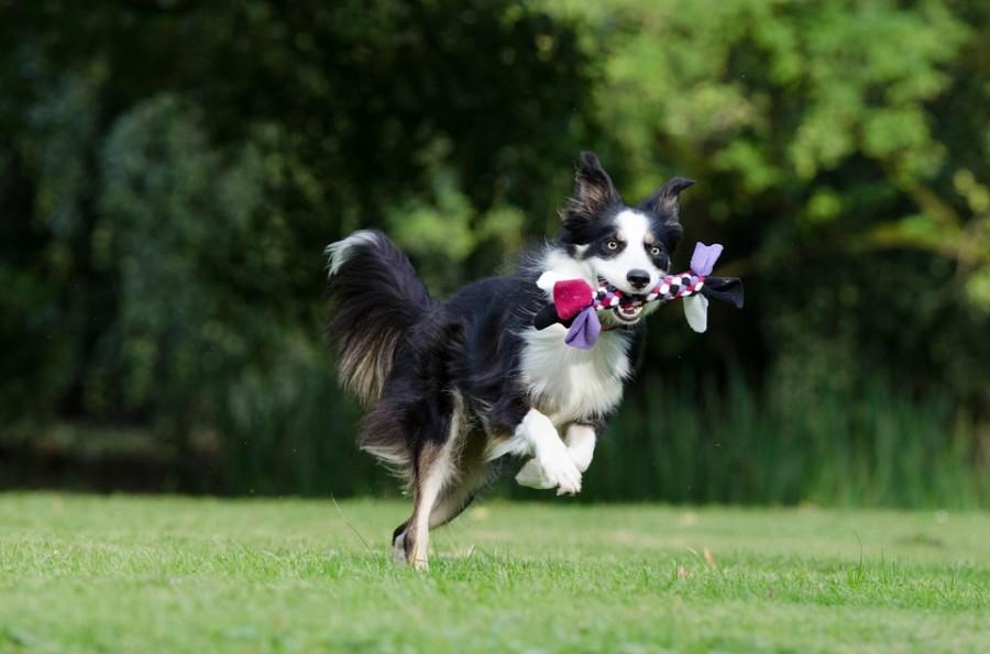 Bewegung und eine ausgewogene Ernährung helfen, Erkrankungen des Hundes vorzubeugen. Foto: /pixabay.com(CC0)