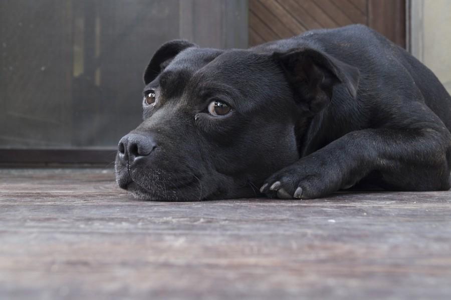 Bewegungseinschränkung, Abgeschlagenheit, Müdigkeit: Die Ursache kann eine Gelenkentzündung sein. Doch wie behandeln Sie Hundekrankheiten am besten? Foto: /pixabay.com (CC0)