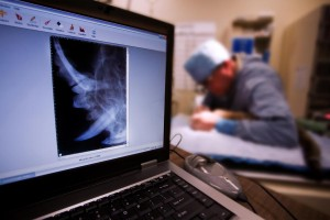 ein Chirurg in der Tierklinik bei der Arbeit