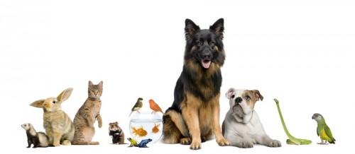 TierklinikenNet Portal für Tierhalter