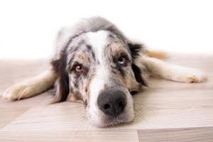 Hund auf dem Boden