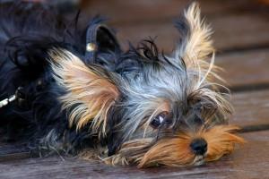 die Haltung von Hund