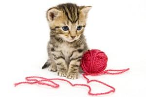 kleine Katze mit Wolle