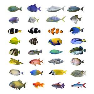 Verschiedene Fischarten