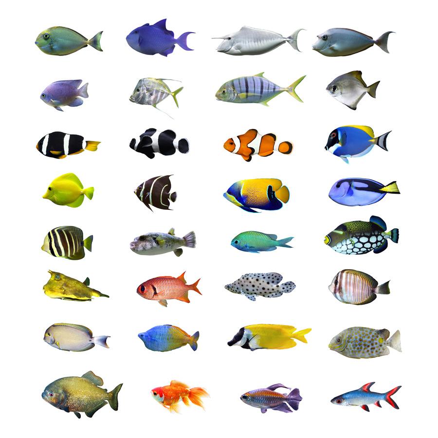 Fische bei TierklinikenNet