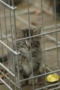 Katze im Tierheim