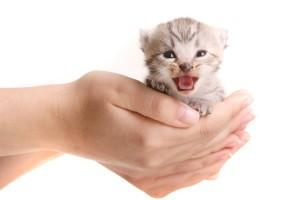 Katzenzüchter