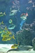 ein sicheres Aquarium