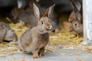 Kaninchen in der Außenhaltung