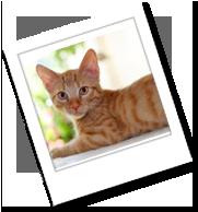 ein europäisch kurzhaar Kitten