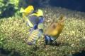 Fische essen vom Bodengrund