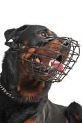 ein Hund mit einem Maulkorb