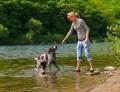 ein Hund spielt im Wasser
