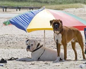 zwei Hunde mit einem Sonnenschirm