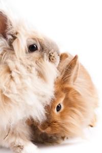 Die Körpersprache der Kaninchen