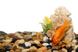 Bodengrund in Aquarien
