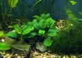 echte Pflanzen im Aquarium