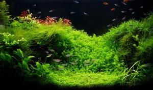 Ein Aquarium mit Fischen