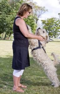 ein Hund springt eine Frau auf der Wiese an
