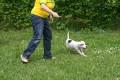 Hund spielt auf einer Wiese mit seinem Spielzeug