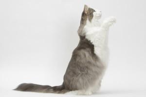 Katze trainiert